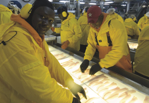 American Seafoods processors check the quality of fillets